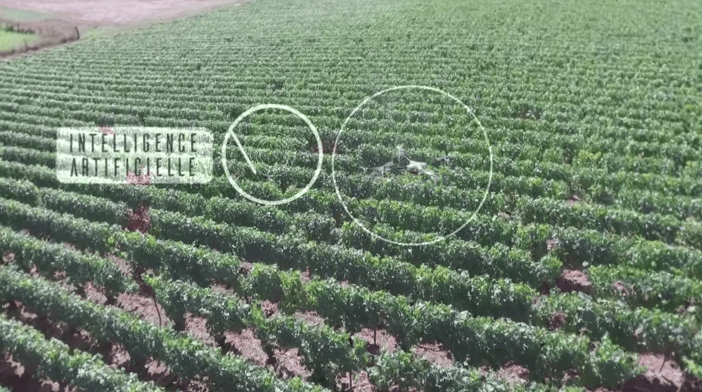Terabee Sensors Modules TeraRanger One helps ensure vineyard health with drone-based solution